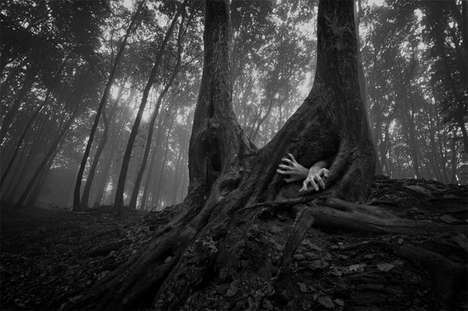 Foreboding Forest Photography - The Forests of Romania Shot by PhotoCosma is Eerily Alluring