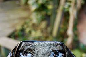 The My Dog Sighs 'Canman' Series is Made Out of Crushed
