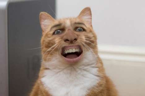 nicholas cage cat tumblr