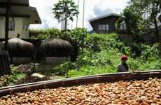 Ethical Organic Java Beans