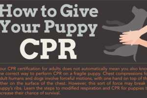 The 'How To Give Your Puppy CPR' Chart is Revealing