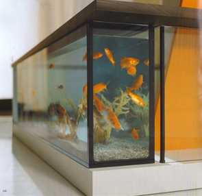 Bathtub Aquariums - Even Moody Acquario