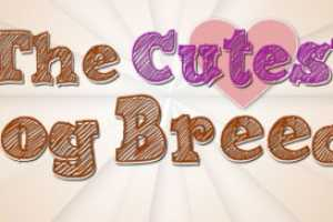 The 'Cutest Dog Breeds' Infographic is Unscientific Greatness