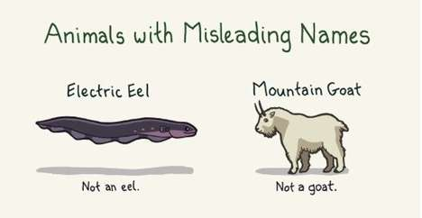 Animals with Misleading Names comic