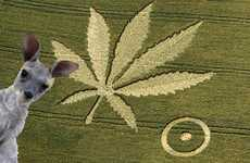 11 Crop Circle Uncertainties