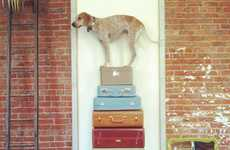 Unusual Canine Photography - The Photographs by Theron Humphrey Feature His Dog in Odd Situations