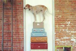 The Photographs by Theron Humphrey Feature His Dog in Odd Situations