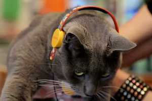 Sol Republic's X Meowingtons Headphones Are for Pets