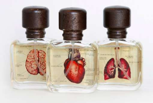 Anatomically Illustrated Scents