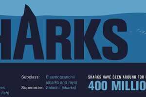 The 'Shark Wranglers' Infographic Looks at the Species in Depth