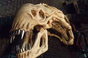 The Alien Trophy Skull Makes Movie Buffs Look Tougher