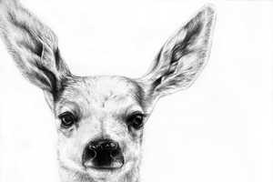 Jaimee Paul Depicts Animals in Detail