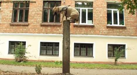 TreT-The Parkour Dog