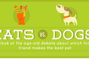 The 'Cats Versus Dogs' Infographic is a Must-Read for Pet Owners