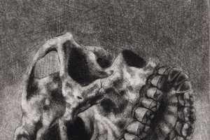 Clara Lieu Depicts Craniums with Multiple Jaws