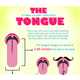 Mouth Anatomy Manuals - The '15 Things You Didn't Know About The Tongue' Infograph (GALLERY) 1
