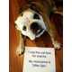 The 'Dog Shaming' Tumblr Exposes the Bad Behaviour of 7