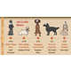 Canine Identification Infographics - The Dog Names Chart Examines Famous and Popular Titles (GALLERY) 2