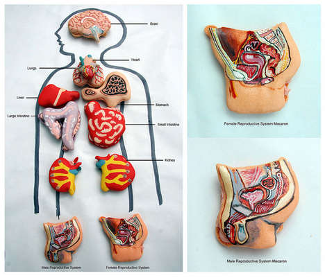 anatomical macarons