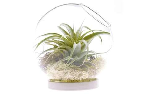 Chive Inc. Terrariums 