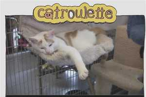 The Catroulette Site Sifts Through Felines Who Need Homes