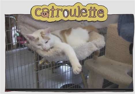 Catroulette website