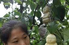 Spiritual Leader-Shaped Fruits