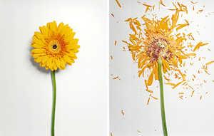 The John Shireman Broken Flowers Series is Beautifully Battered