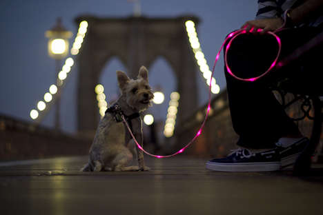 Lights-Up Dog Leash