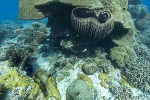 Google Maps' Underwater Street View Collection Dives Below the Surface