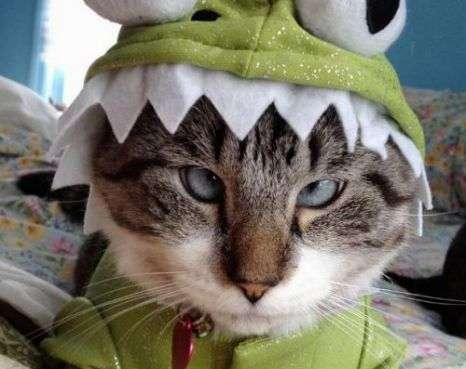 Costumed Cat Stars