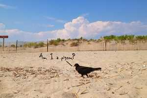 Mike Immerman Today's Pigeon Explores Fowl Minds
