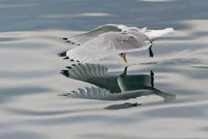 The Geir Magne Sætre Water Reflection Photos of Birds are Reflective