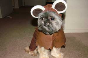 Dress Your Pooch Up in a Star Wars Halloween Ewok Costume This Year