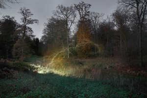 Nick Rochowski Photographs Wonderful Wooded Landscapes