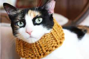 The Knitted Scarf for Cats is Stylish and Adorable