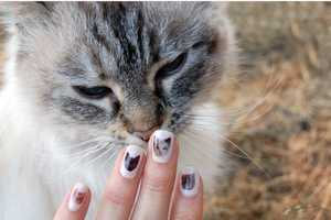 The DIY Cat Nail Decals are a Must Try for any Kitty Lover