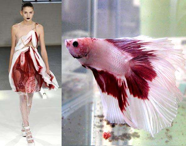 Fish-Inspired Fashion