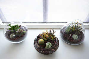 The Brick House 'DIY Terrarium' is Customizable