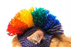 The Mohawk Cat Hat Costume Brings Out the Bad in Your Feline