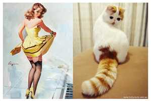 The 'Cats That Look Like Pin-Up Girls' Tumblr is Spot On