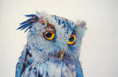 Colored Owl Drawings