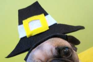 This Thanksgiving Dog Hat is Adorable for the American Holiday