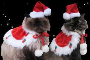 The Jolly St. Nick Holiday Set Makes an Adorable Cat Christmas Costume
