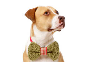 The Christmas Dog Bow Tie is a Festively Crocheted Accessory