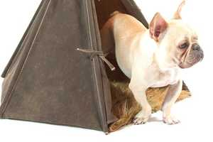 The Deluxe Field Tent is an Army Tent for Your Dog