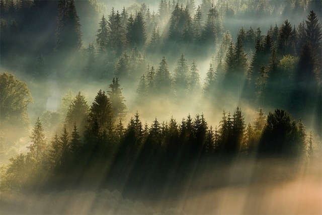Fantastical Fog Photography