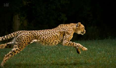 Slow Motion Feline Videos - National Geographic Releases Cheetahs in Slow Motion