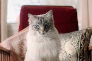 The Mammoth Modern Insulation Prince Nikolai Advert Uses the Cat Meme
