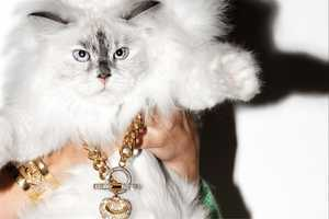 Sparkly Baubles Looks Purrfect in Juicy Couture Holiday Campaign